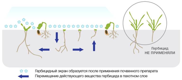 Схема действия почвенного гербицида.