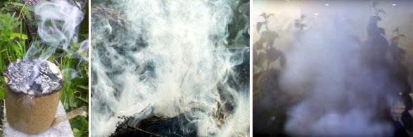 Окуривание теплицы табачным дымом